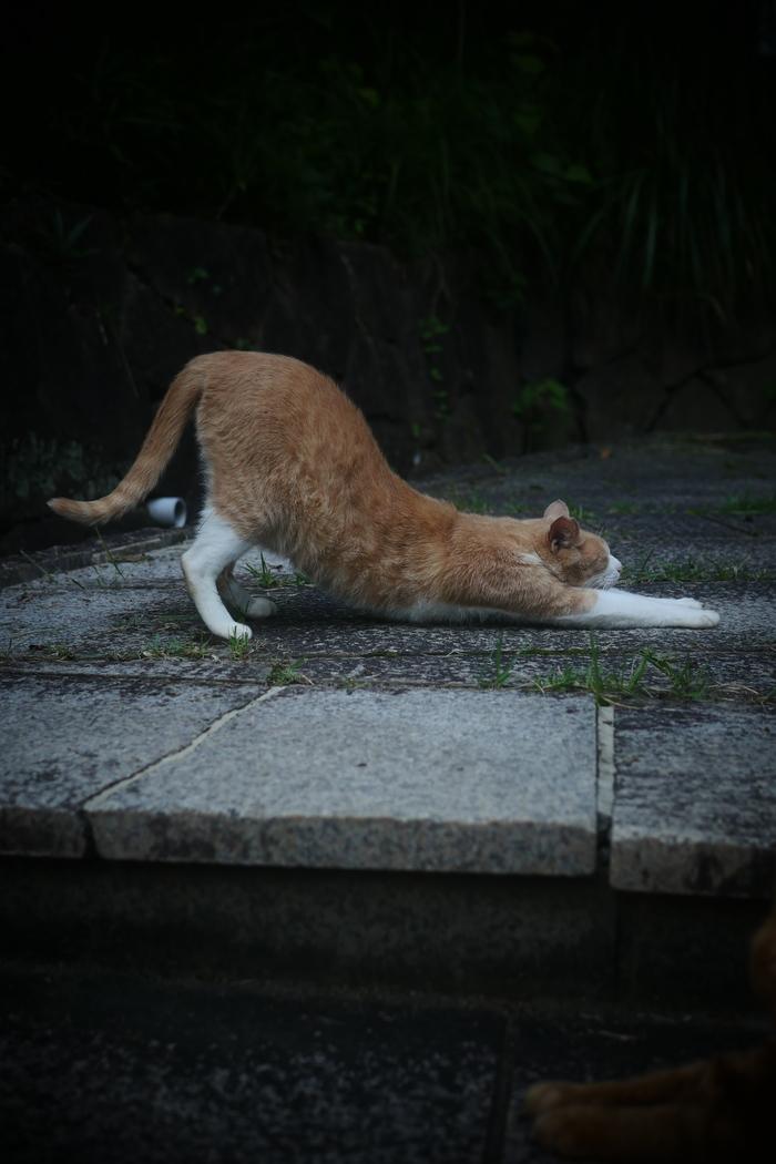 猫にゃん_f0021869_0161249.jpg