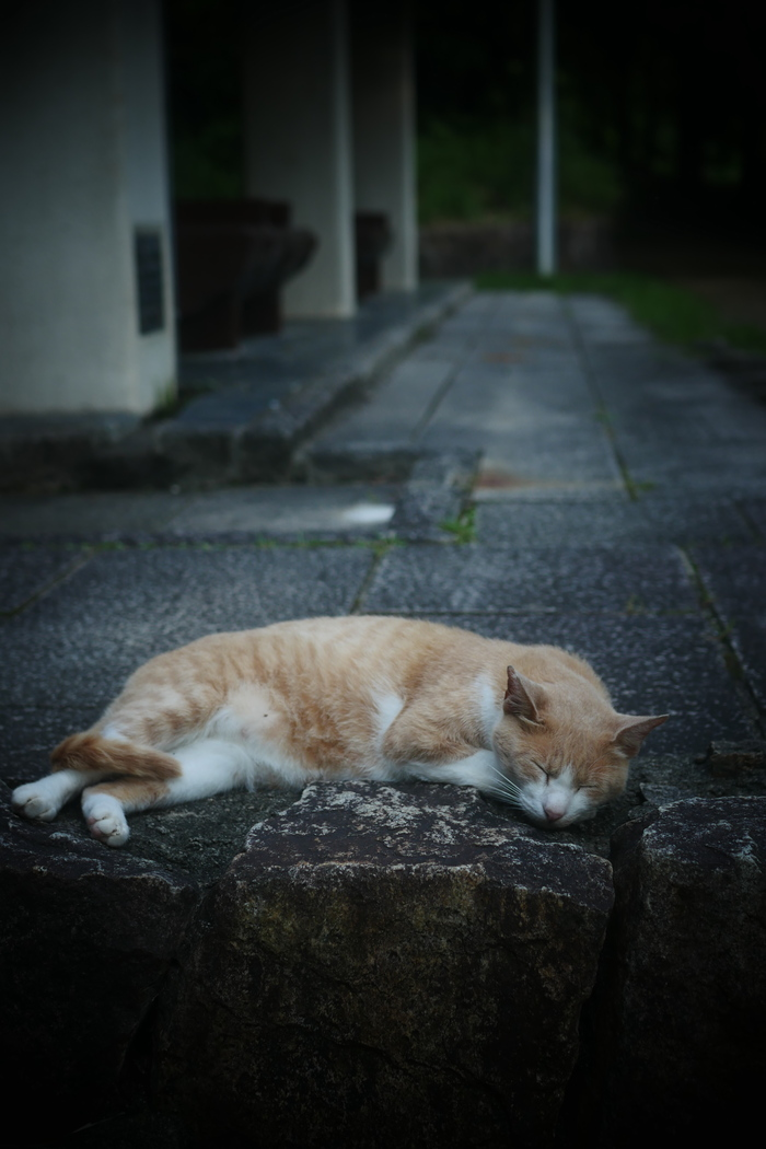猫にゃん_f0021869_0171240.jpg