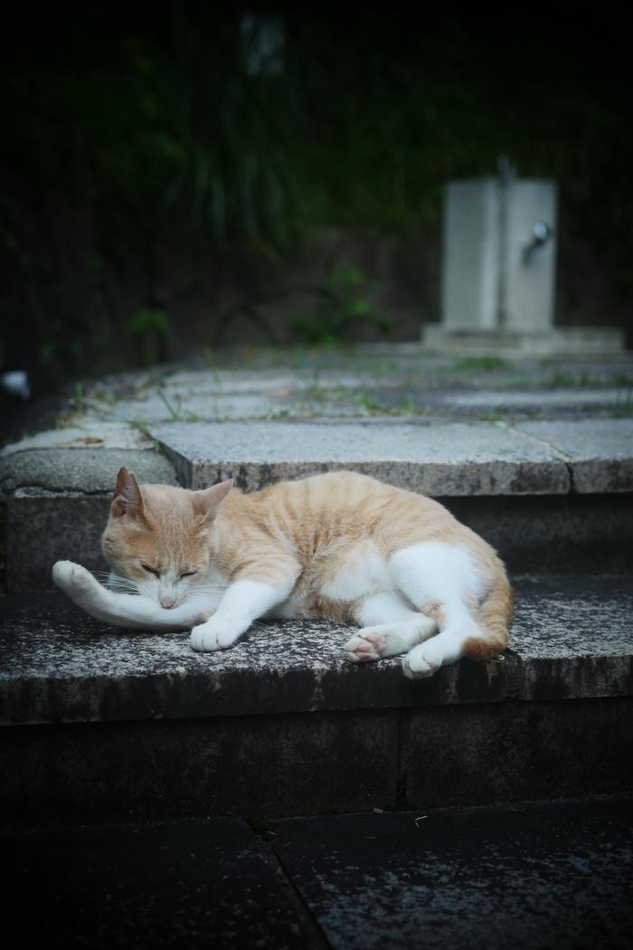 猫にゃん_f0021869_0172849.jpg