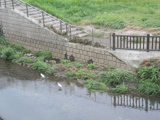 昨日の善福寺川の水位?_e0232277_10164543.jpg
