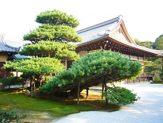 京都、金閣寺_c0192215_16362775.jpg