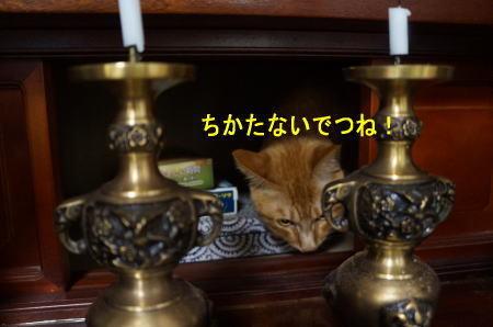 d0013645_17114473.jpg