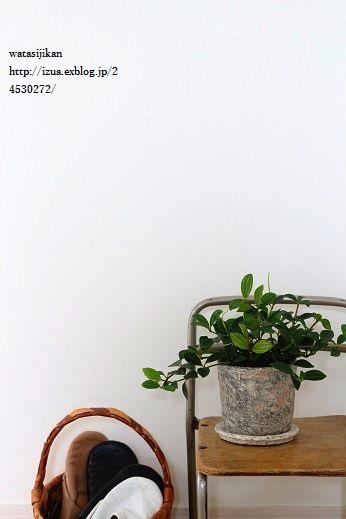 観葉植物、ぺぺロミアを置く_e0214646_1531576.jpg