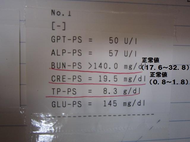 【ネコちゃん急性腎不全から復活】_b0059154_14584423.jpg