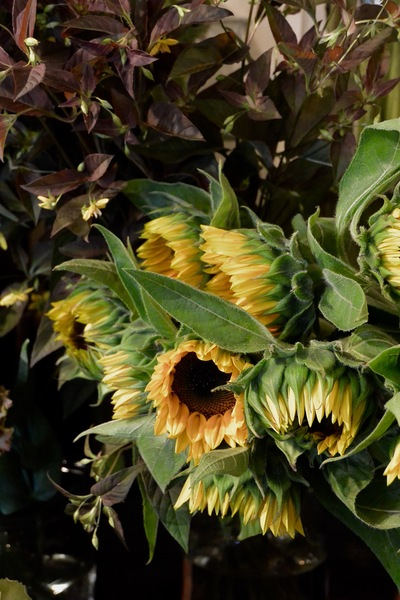 yellow  and  brown 。。。_a0229658_15595066.jpg