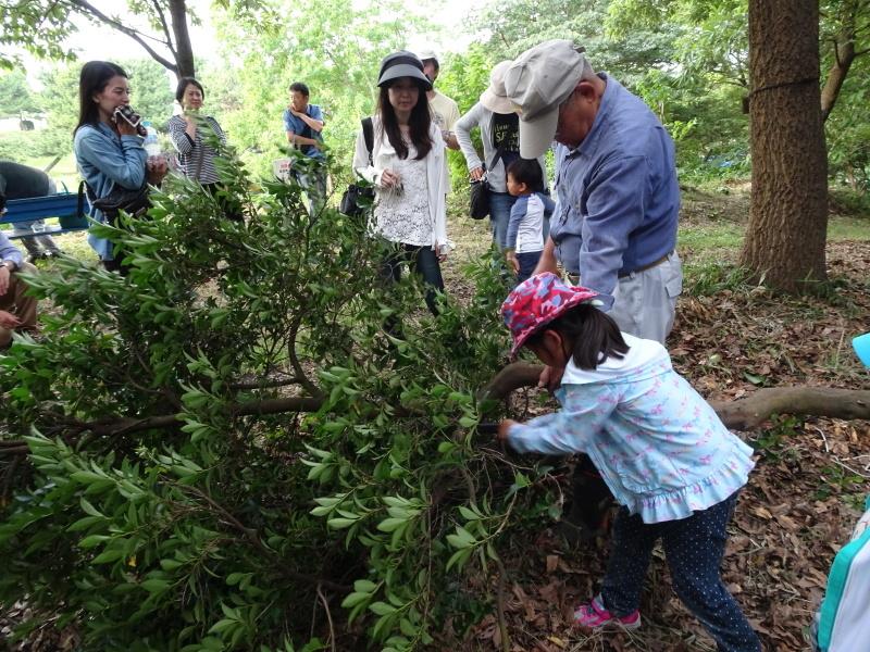 第1回「うみべの森でカブトムシを探そう!」_c0108460_01111969.jpg