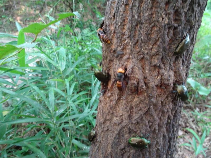 第1回「うみべの森でカブトムシを探そう!」_c0108460_01160377.jpg
