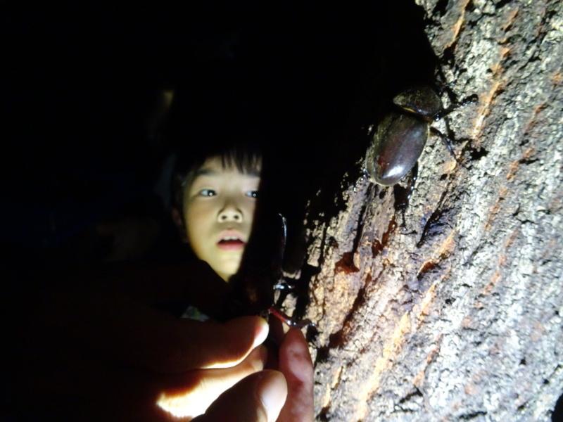 第1回「うみべの森でカブトムシを探そう!」_c0108460_01165137.jpg