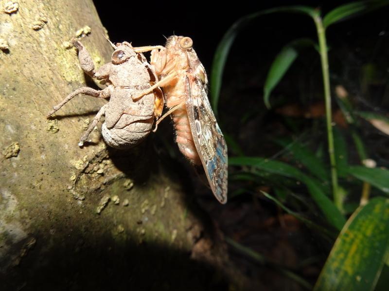 第1回「うみべの森でカブトムシを探そう!」_c0108460_01203127.jpg