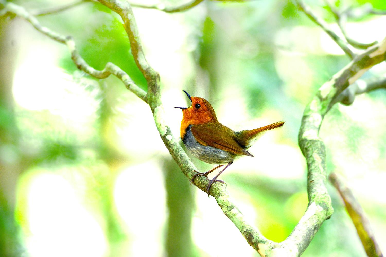 山で鳥散策のはずが・・・_f0215767_12252431.jpg