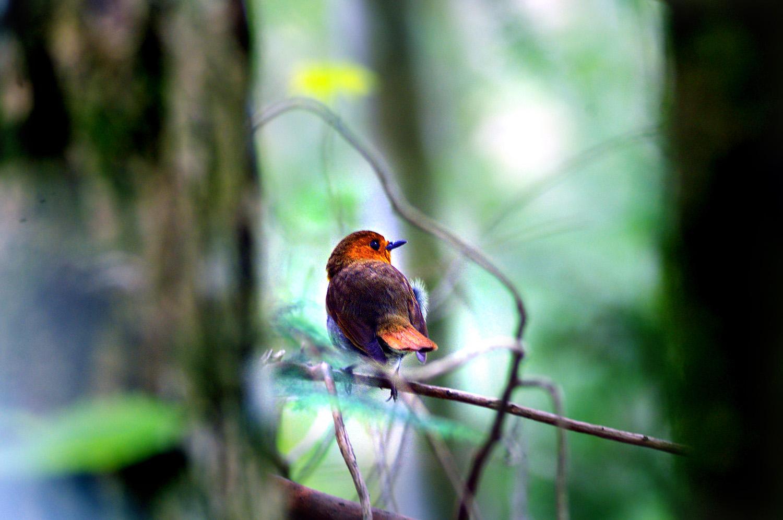 山で鳥散策のはずが・・・_f0215767_12253142.jpg