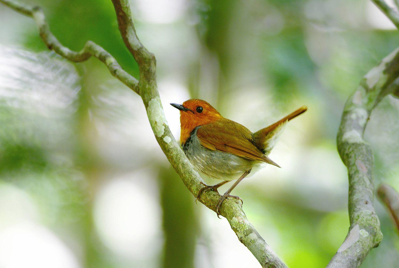 山で鳥散策のはずが・・・_f0215767_12253750.jpg