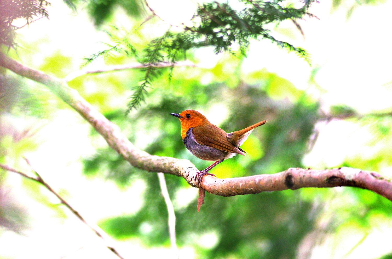 山で鳥散策のはずが・・・_f0215767_12254367.jpg