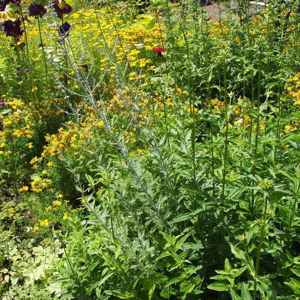 多年草のハーブ、成長もそれぞれ_a0292194_15125692.jpg