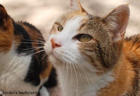 コーンを頬張る猫たち_b0253205_04563846.jpg