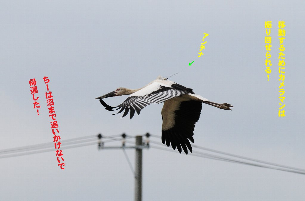 e0309106_2011419.jpg