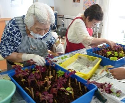 【7月の園芸療法】生け花&観葉植物_d0163307_16023732.jpg