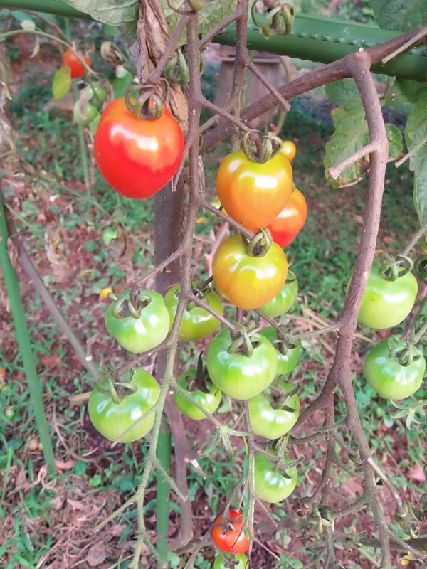 「秋野菜」の準備。_a0125419_06275540.jpg