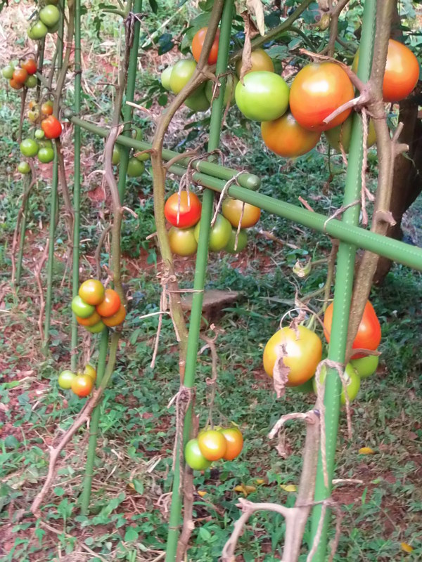 「秋野菜」の準備。_a0125419_06282124.jpg