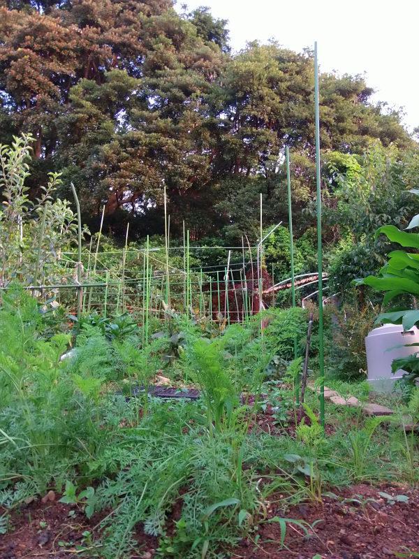 「秋野菜」の準備。_a0125419_06324105.jpg