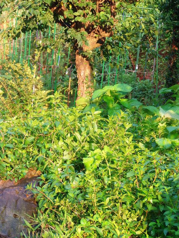 「秋野菜」の準備。_a0125419_06331641.jpg