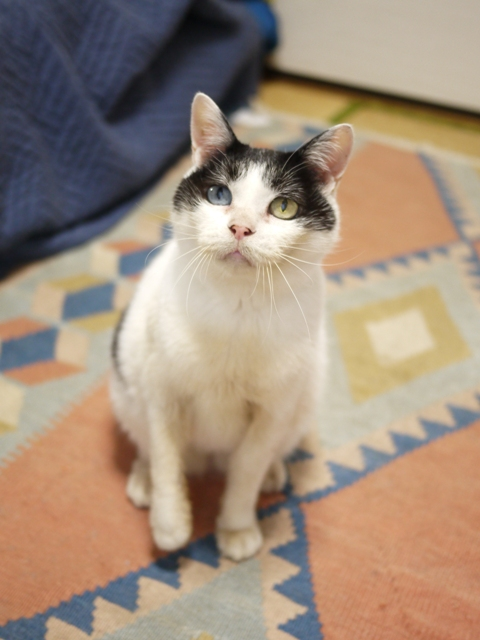 猫のお留守番 ヘキサちゃんヘプタちゃん編。_a0143140_21543186.jpg