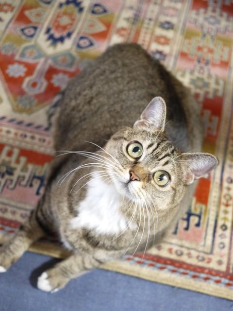 猫のお留守番 ヘキサちゃんヘプタちゃん編。_a0143140_21564946.jpg