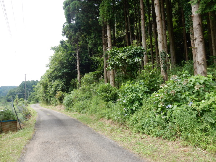'16,7,18(月)田舎道に行ってきたYO!_f0060461_11453968.jpg