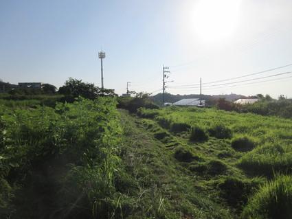 岬高校畑の草刈り  by  (ナベサダ)_f0053885_20114147.jpg