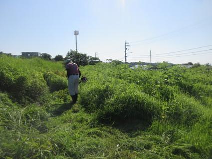 岬高校畑の草刈り  by  (ナベサダ)_f0053885_2085910.jpg