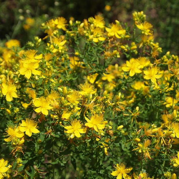 多年草のハーブ、成長もそれぞれ_a0292194_11285745.jpg