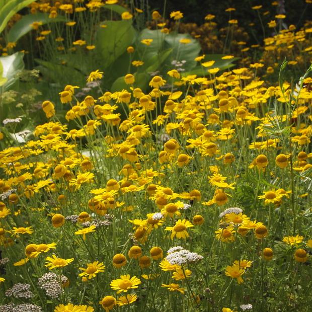 多年草のハーブ、成長もそれぞれ_a0292194_11303327.jpg
