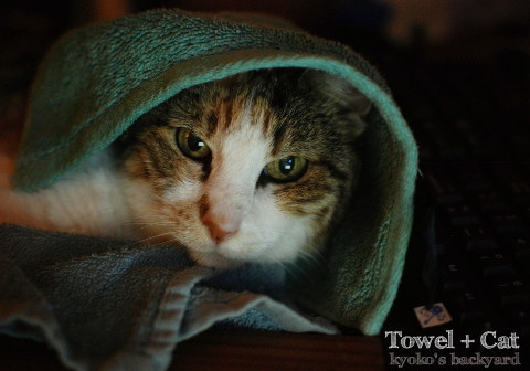 猫にタオルをかぶせたら_b0253205_02441076.jpg