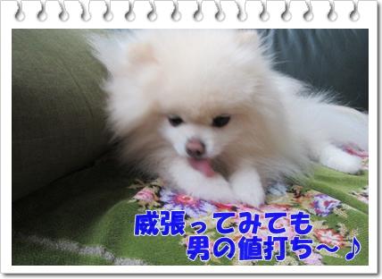 b0167519_131413.jpg