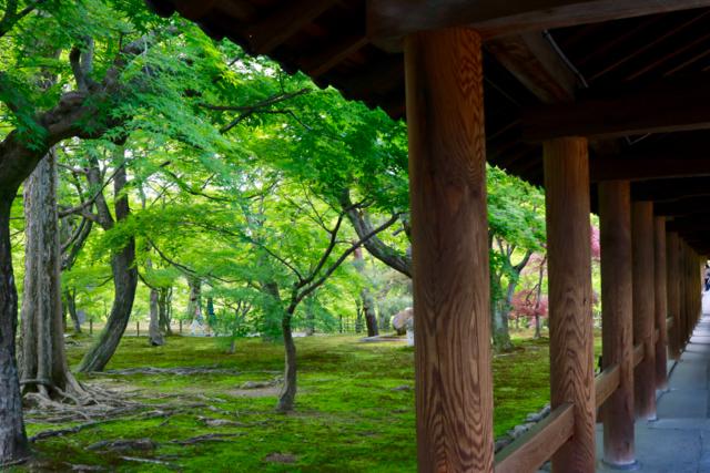 【東福寺 1】京都旅行 - 17 -_f0348831_23034830.jpg