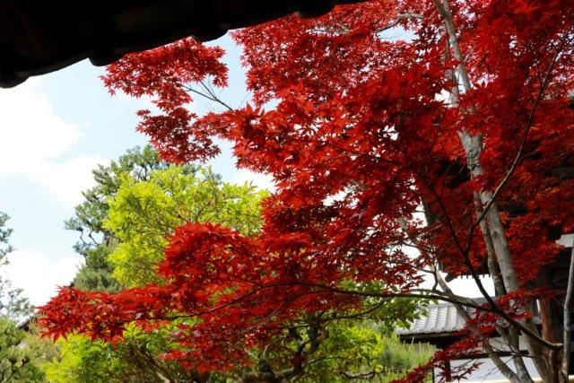 【東福寺 1】京都旅行 - 17 -_f0348831_23042395.jpg
