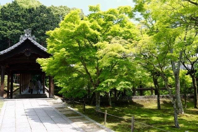 【東福寺 1】京都旅行 - 17 -_f0348831_23043737.jpg