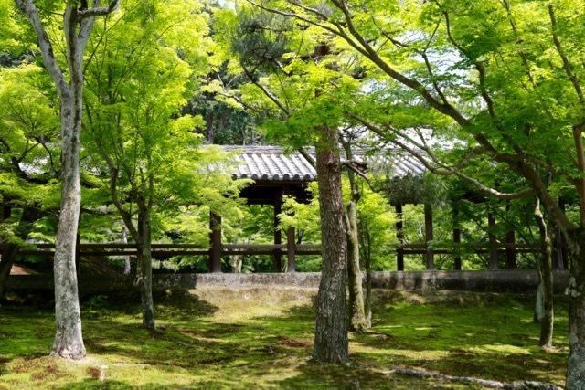 【東福寺 1】京都旅行 - 17 -_f0348831_23043749.jpg