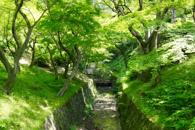 【東福寺 1】京都旅行 - 17 -_f0348831_23044851.jpg