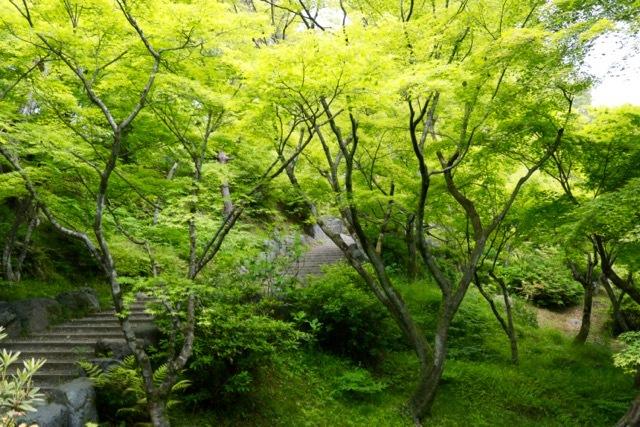 【東福寺 1】京都旅行 - 17 -_f0348831_23044862.jpg