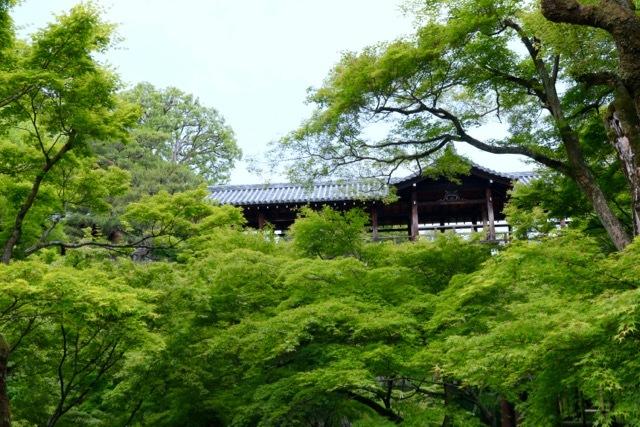 【東福寺 1】京都旅行 - 17 -_f0348831_23044974.jpg