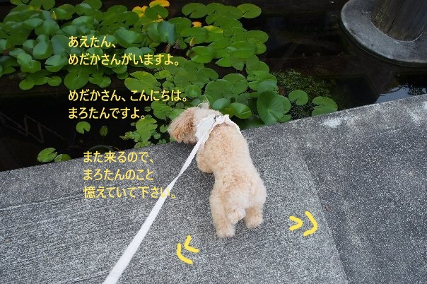 b0149340_20582854.jpg