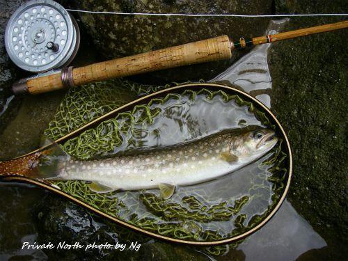 昨日の釣り_d0261148_14345521.jpg