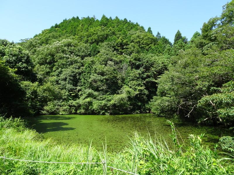 孝子地区高速道路に孝子の森が・・・    by  (TATE-misaki)_c0108460_21280768.jpg