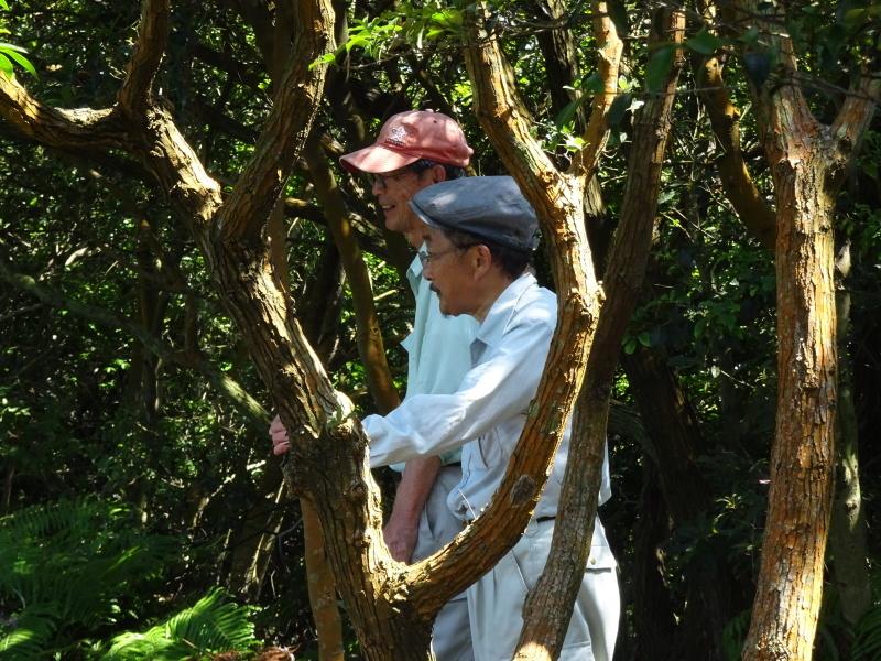 孝子地区高速道路に孝子の森が・・・    by  (TATE-misaki)_c0108460_21542613.jpg