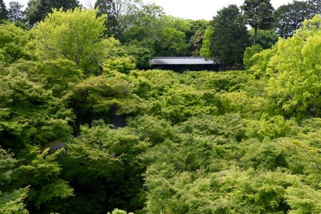 【東福寺 1】京都旅行 - 17 -_f0348831_08110216.jpg