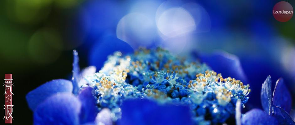 庭の紫陽花達 ~EOS7D2 + EF100mmF2.8LmacroIS USM~_b0157849_19261384.jpg