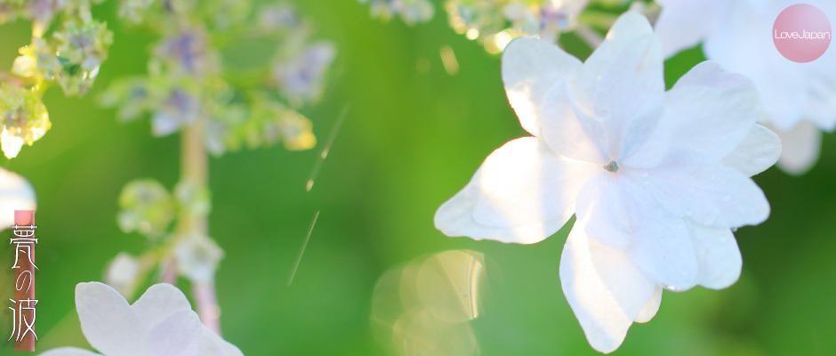 庭の紫陽花達 ~EOS7D2 + EF100mmF2.8LmacroIS USM~_b0157849_19262480.jpg