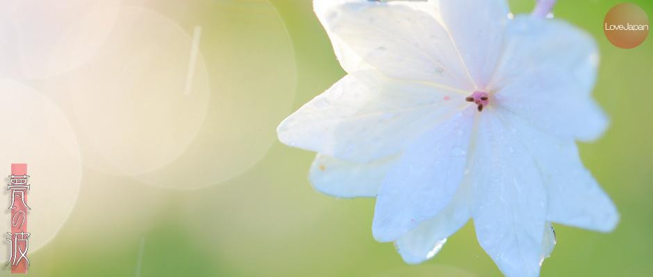 庭の紫陽花達 ~EOS7D2 + EF100mmF2.8LmacroIS USM~_b0157849_19263149.jpg