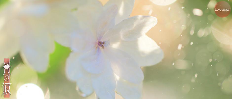 庭の紫陽花達 ~EOS7D2 + EF100mmF2.8LmacroIS USM~_b0157849_19265062.jpg